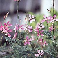 宿根草の販売・(株)日園|新潟県新潟市の園芸業者
