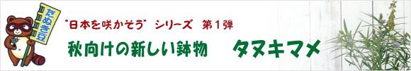 新商品・日本を咲かそうシリーズ・秋向けの新しい鉢物【タヌキマメ・狸豆・たぬき豆・原産地は日本】日本に生えている野生植物です